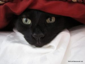 hiding-under-the-covers